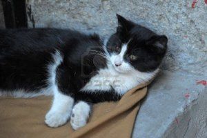 10079677-black-and-white-cat