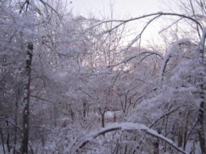 An Ice Tree 2