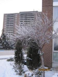 An Ice Tree 1