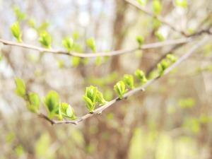 branch-102812-640-creativecommons