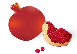 ppomegranates-vector_zjzpzzd__l